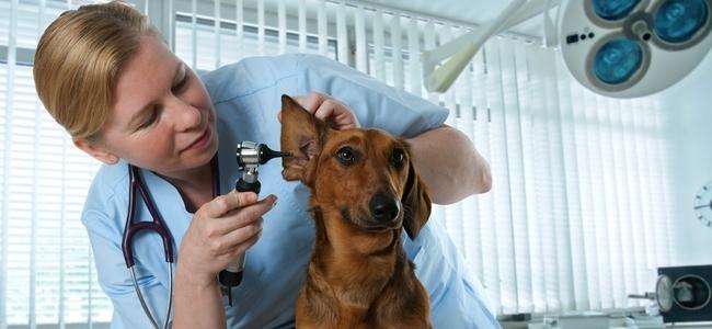 ветеринарный врач вакансии санкт-петербург